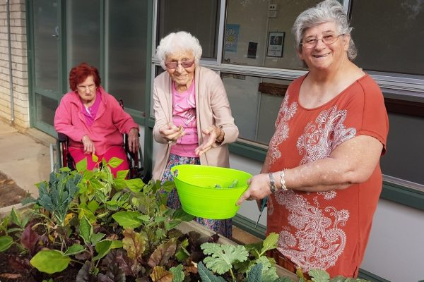 Growing social connections through gardening